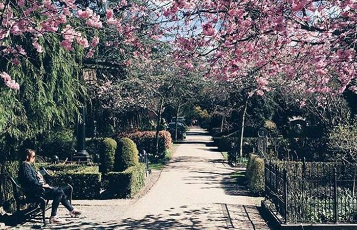With a coffee in hand, explore one of Nørrebro's most beloved green spaces: the Assistens Cemetery